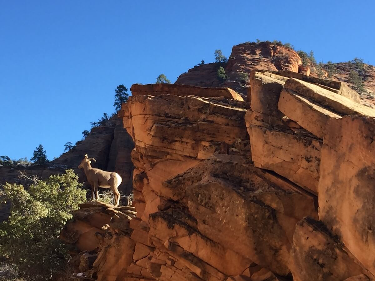 """Hidden"" Pictures in Zion National Park"
